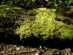 A moss-covered log